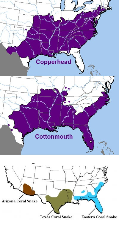 range of 3 deadliest snakes in the usa 3 in top 5
