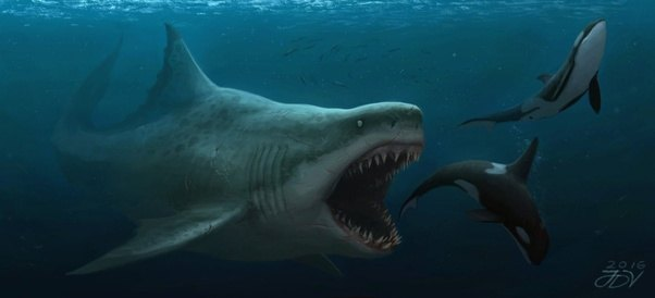 What extinct species would be able to compete with orcas as the apex predator of the ocean? - Quora