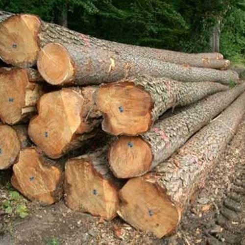 Which Is The Best Quality Of Teak Wood In World Quora