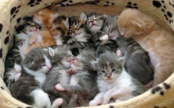 Image result for litter of kittens images