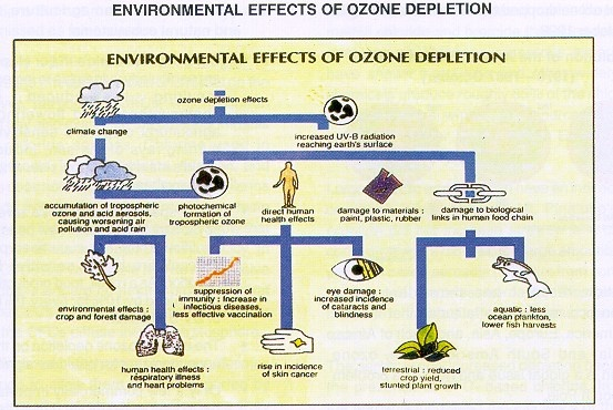 What are the effects of ozone layer depletion? - Quora
