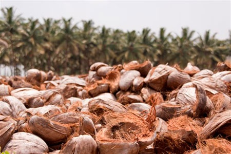 How to get buyers Coir Pith from Dubai - Quora