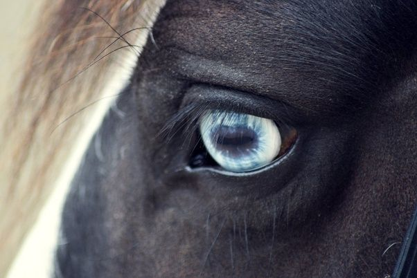 What Are The Main Characteristics Of A Wall Eyed Horse
