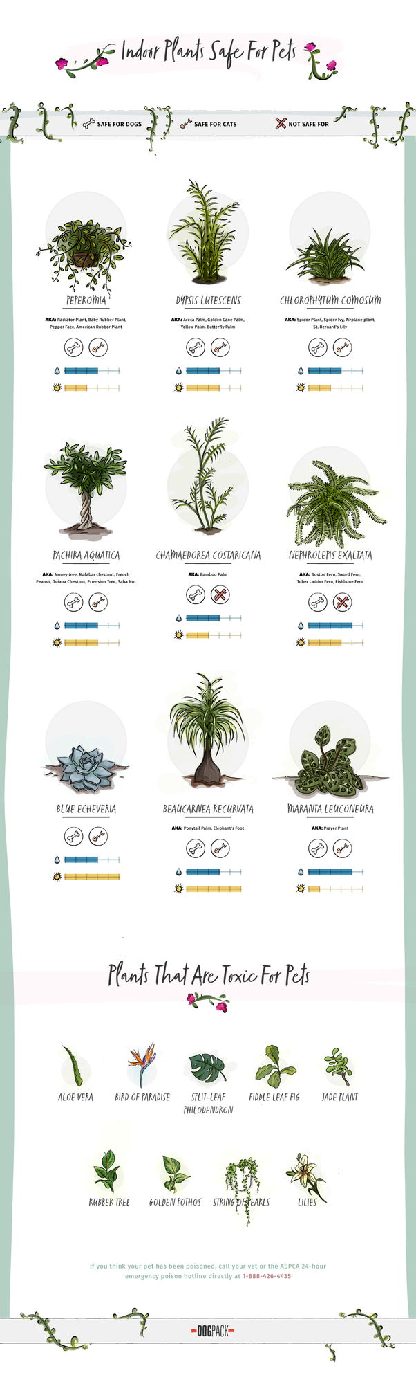 Are succulents poisonous? - Quora