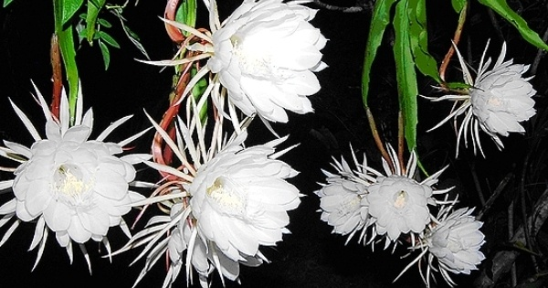 Why Do Flowers Bloom At Night Quora