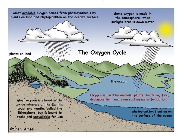 What are the steps in the oxygen cycle quora the movement of oxygen within its three main reservoirs the atmosphere air the total content of biological matter within the biosphere the global ccuart Images