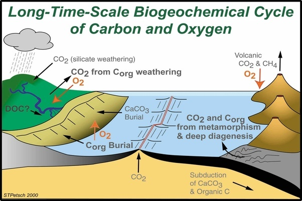 What is the importance of carbon dioxide and oxygen cycle quora help someone who cannot breathe by providing them with oxygenants and other organisms that perform photosynthesis rely on animals for carbon dioxide ccuart Images