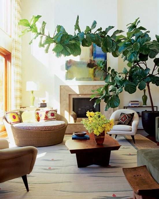What is the most beautiful looking house plant? - Quora