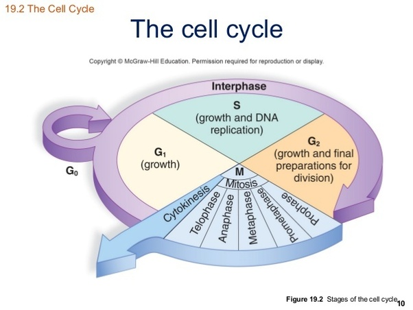 What happen to the body when there is uncontrolled cell ...