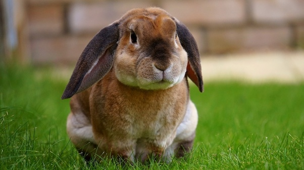 What's the meat of the rabbit called? - Quora