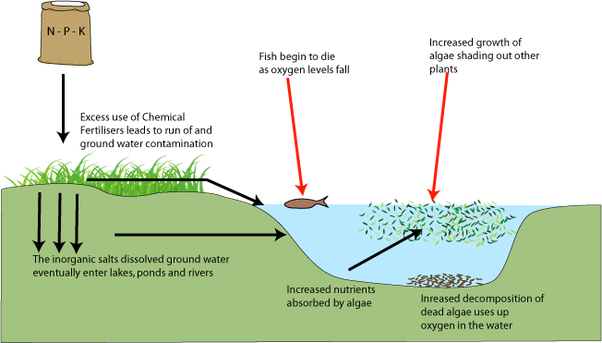 eutrophication water and clear class combined A conceptual model of the relation of water clarity to eutrophication water clarity is affected by light attenuation in the water, caused by dead and living organisms, dissolved coloured substances and inorganic particles.