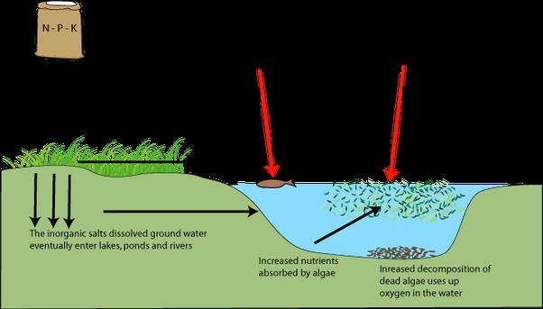 what is eutrophication quora
