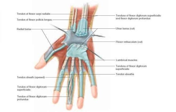 Is A Ganglion Cyst And Bursitis The Same Thing If Not What Is The