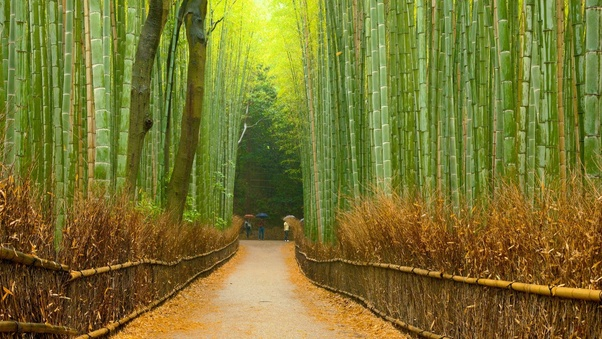Is the Arashiyama bamboo grove closed to visitors? - Quora
