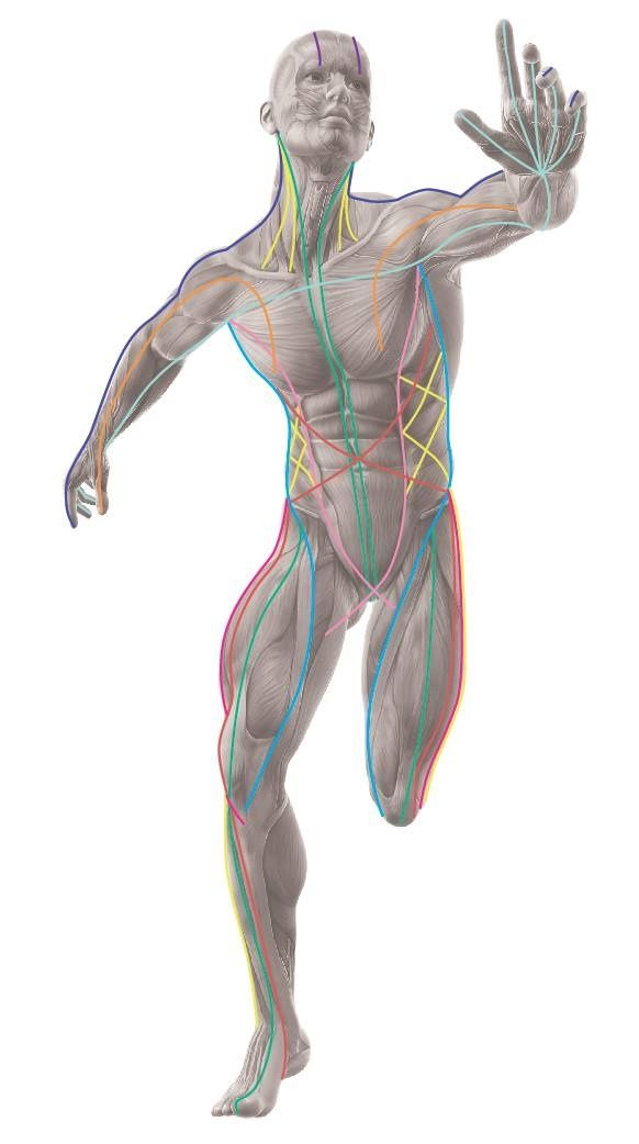 Have You Tried Applied Kinesiology Did It Work Quora
