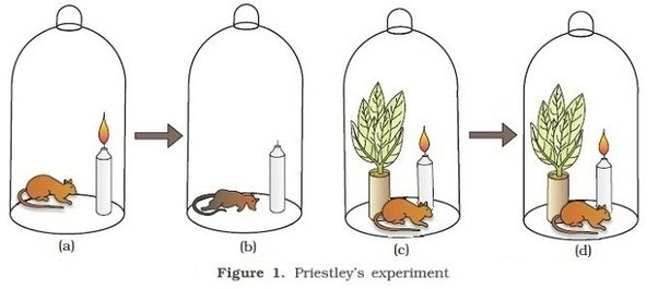 Jan Ingenhousz Experiment >> Who discovered that oxygen is produced by green plants ? - Quora