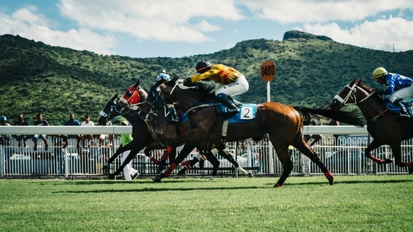 Bet on all horses in a race binary trade options reviews