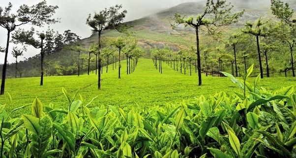 How did Idukki district merge with Kerala when it had huge ...