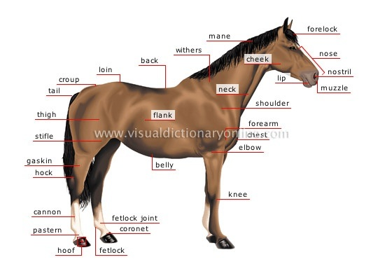 Facts About Horses Behavior For Kids