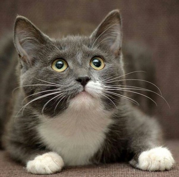 Gray Cat With Green Eyes Names