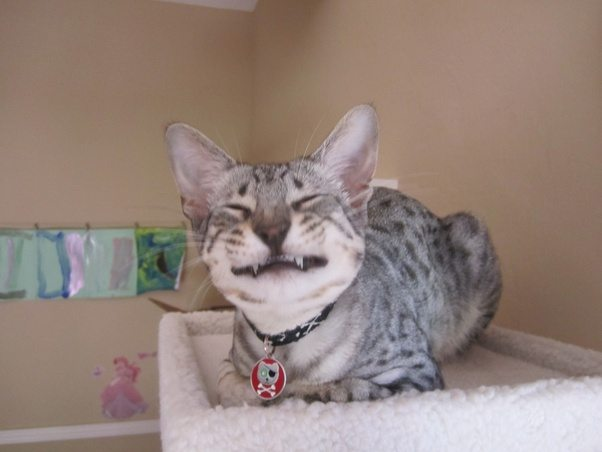 Can Cats Smile Yahoo