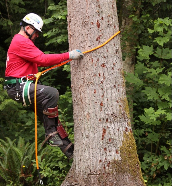 What Is The Best Way To Climb A 100 Foot Tree With Very