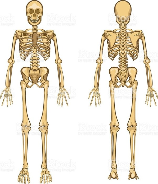 Do Only Monkeys And Humans Have A Joint Connecting Their Arms