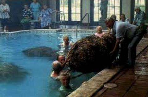 What Are Some Of The Best Swimming Pool Scenes In Film And Television Quora