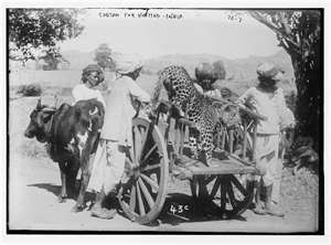 Wildlife: When did the cheetah become extinct in India? - Quora