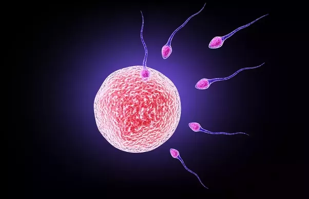 Embryo implantation and orgasm — img 15
