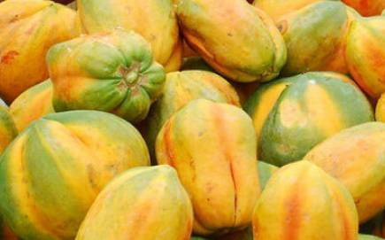 How to find export buyers for my farm produce like mango, watermelon