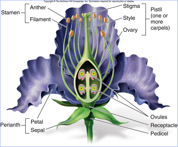 What are the different parts of a pistil in a plant? - Quora