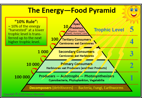 How Does An Energy Pyramid Help To Describe The Flow Of Energy In A