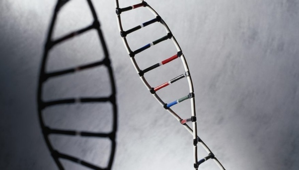 What Is The Difference Between Coding And Non Coding Dna Quora