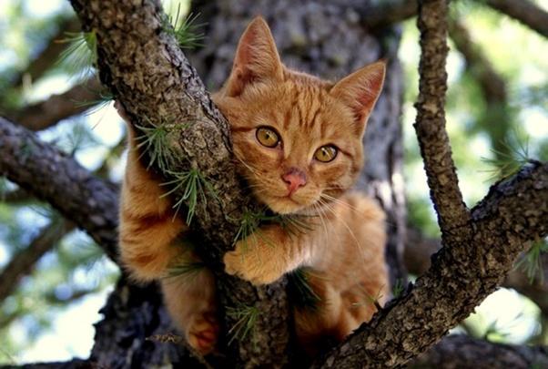 how do you deworm a cat