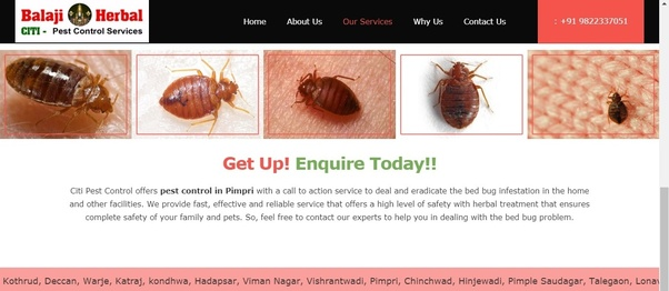 Which Is The Best Herbal Pest Control Service Provider In Pimpri