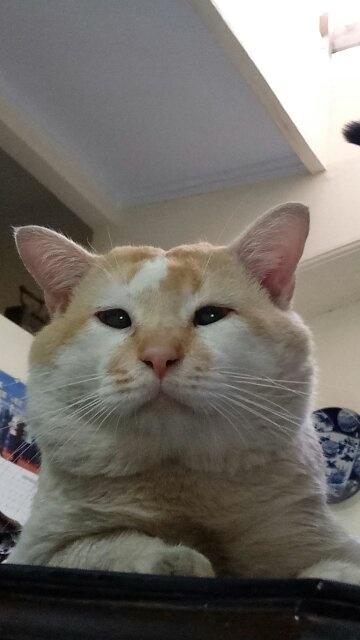 Bagaimana Cara Membuat Kucing Cepat Gemuk Gendut Quora