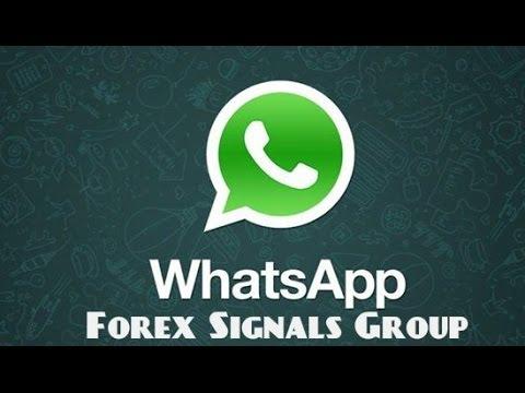 Forex signals whatsapp group link