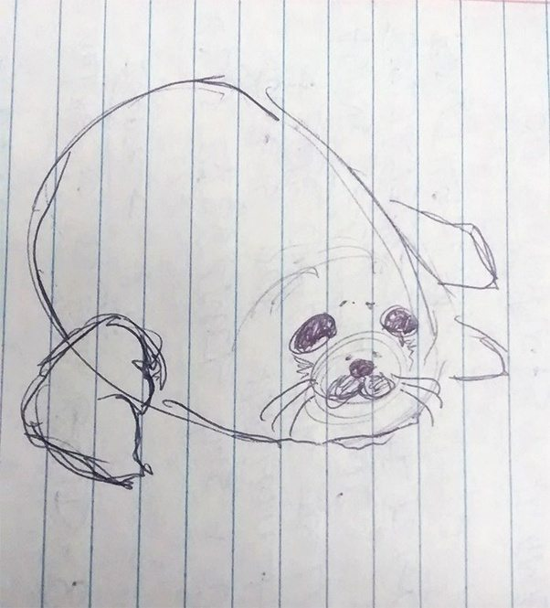how to draw a harp seal quora