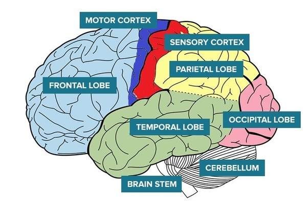 What kind of stroke causes certain body parts to stop ...