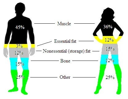 comparison of body fat percentage