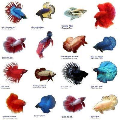 How often should i feed my betta fish quora for How often to feed fish