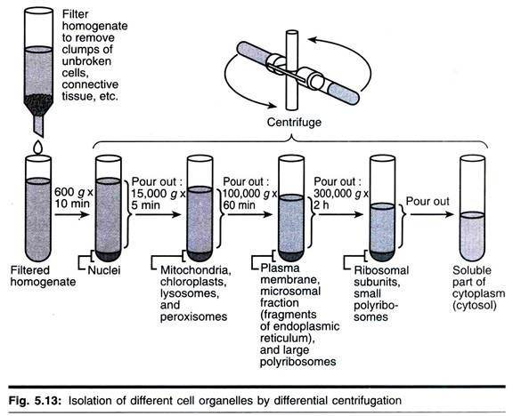 what is differential centrifugation in microbiology