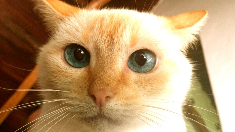 Blonde Cat picture 44