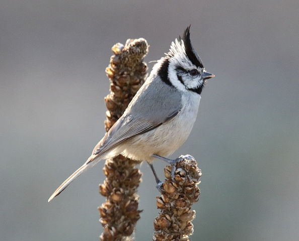 Are Blue Jays And Cardinals In The Same Genus Otherwise How