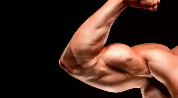 What Are The Best Ways To Increase My Arm Muscles Quora