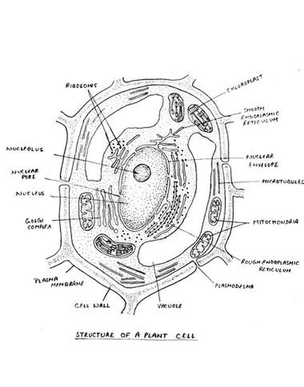 what are the major parts of a cell