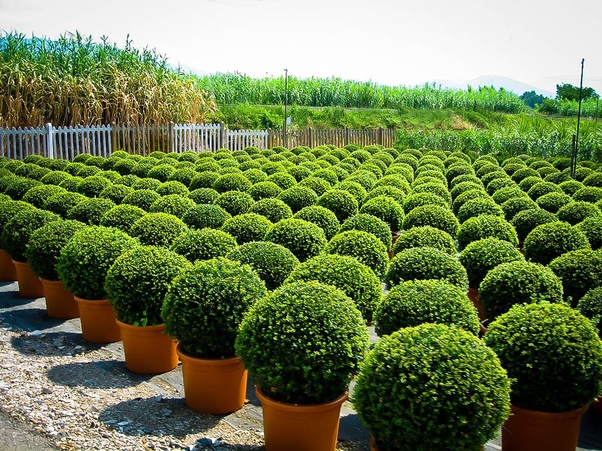 What Some Examples Of Evergreen Trees Quora