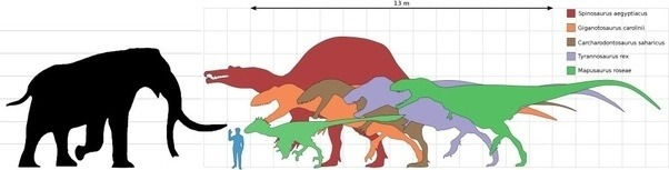 Who would win in a fight: a Tyrannosaurus rex or a mammoth ...