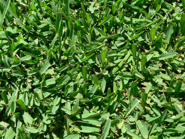 When Is The Best Time Of Year To Spray Lawn Weeds Quora